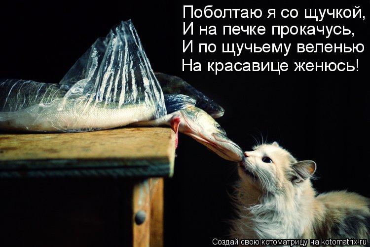 Котоматрица: Поболтаю я со щучкой, И на печке прокачусь, И по щучьему веленью На красавице женюсь!