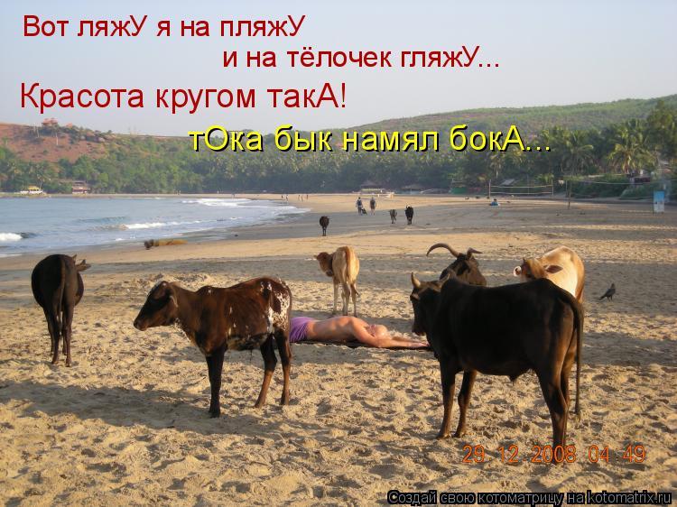 Котоматрица: Вот ляжУ я на пляжУ и на тёлочек гляжУ... Красота кругом такА! тОка бык намял бокА...