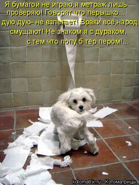 Котоматрица: Я бумагой не играю,я метраж лишь  проверяю! Говорят что перышко... дую,дую- не взлетает! Враки всё,народ  смущают! Не знаком я с дураком, с тем ч