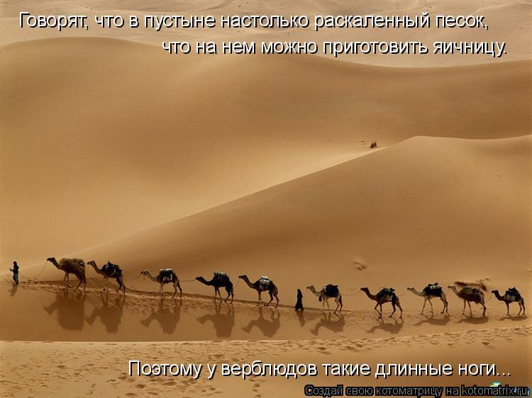 Котоматрица: Говорят, что в пустыне настолько раскаленный песок,  что на нем можно приготовить яичницу.  Поэтому у верблюдов такие длинные ноги...
