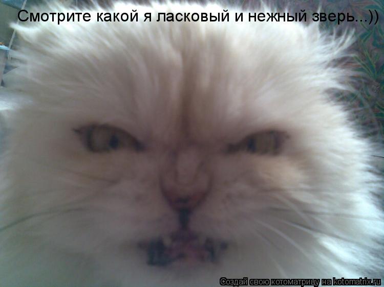 Котоматрица: Смотрите какой я ласковый и нежный зверь...))