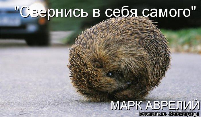 """Котоматрица: """"Свернись в себя самого""""  МАРК АВРЕЛИЙ   МАРК АВРЕЛИЙ"""