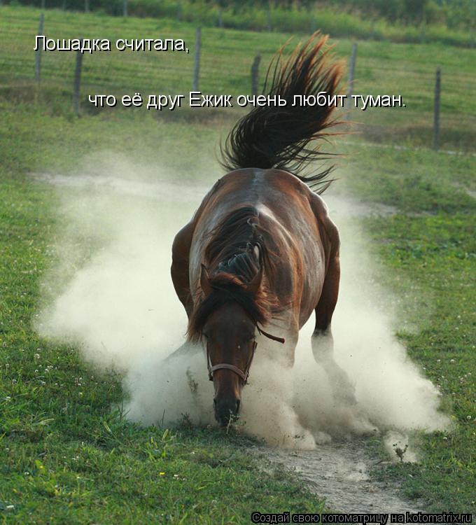 Котоматрица: Лошадка считала,  что её друг Ежик очень любит туман.