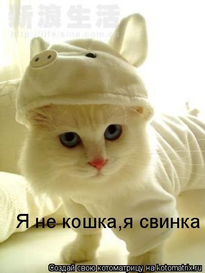 Котоматрица: Я не кошка,я свинка