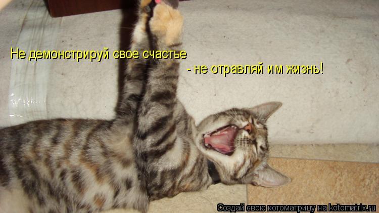 Котоматрица: Не демонстрируй свое счастье  - не отравляй им жизнь!