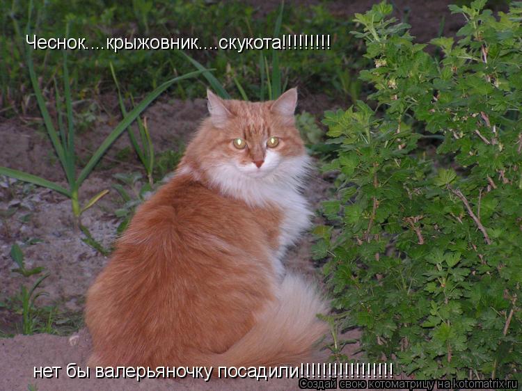 Котоматрица: Чеснок....крыжовник....скукота!!!!!!!!! нет бы валерьяночку посадили!!!!!!!!!!!!!!!!!