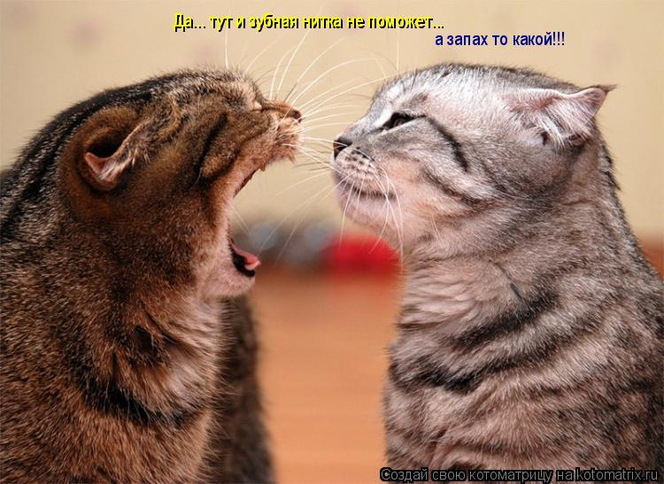 Котоматрица: Да... тут и зубная нитка не поможет... а запах то какой!!!