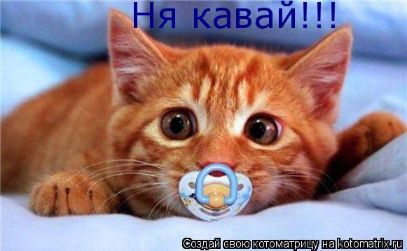 Котоматрица: Ня кавай!!!