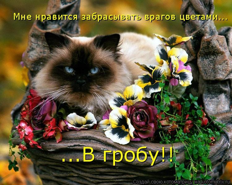 Котоматрица: Мне нравится забрасывать врагов цветами... ...В гробу!!