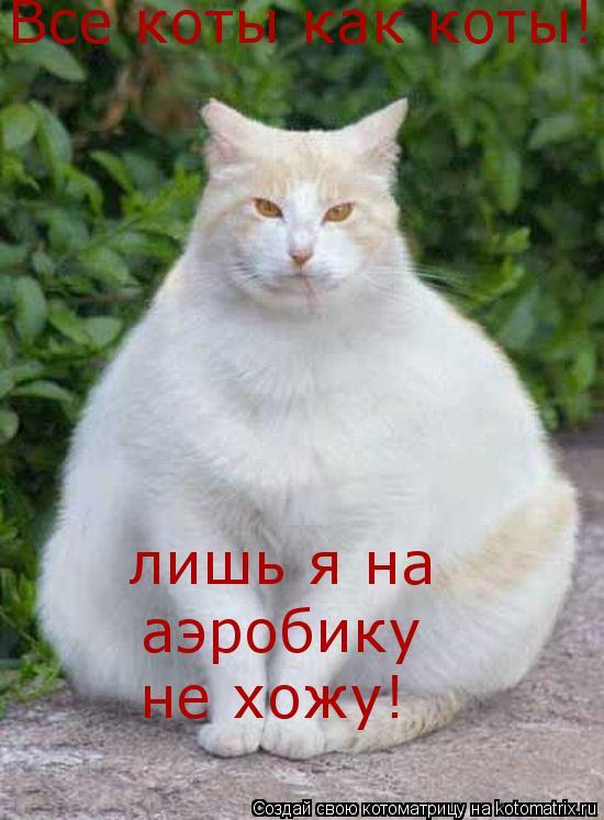 Котоматрица: Все коты как коты! лишь я на  аэробику не хожу!