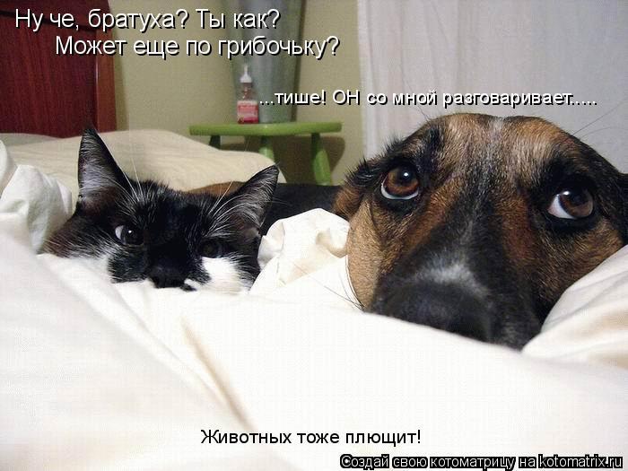Котоматрица: Ну че, братуха? Ты как? Может еще по грибочьку? ...тише! ОН со мной разговаривает..... Животных тоже плющит!