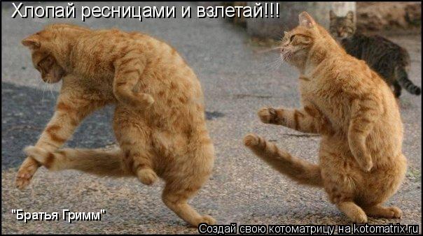 """Котоматрица: Хлопай ресницами и взлетай!!! """"Братья Гримм"""""""