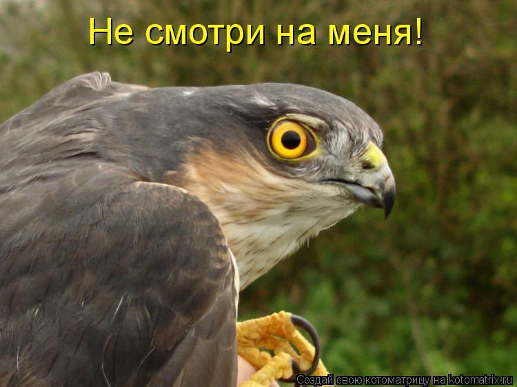 Котоматрица: Не смотри на меня!