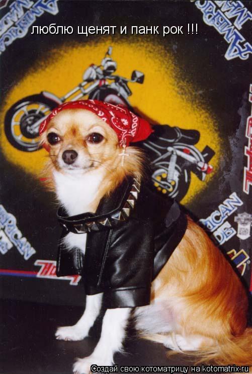 Котоматрица: люблю щенят и панк рок !!!