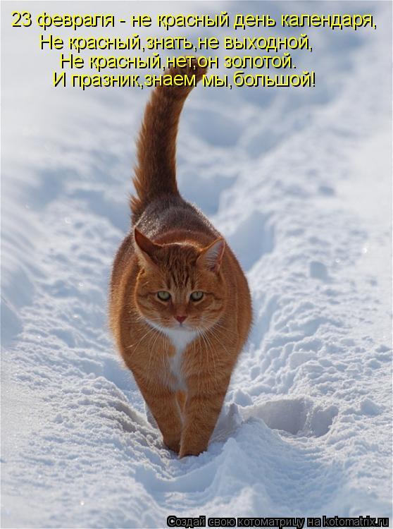 Котоматрица: 23 февраля - не красный день календаря, Не красный,знать,не выходной, Не красный,нет,он золотой. И празник,знаем мы,большой!