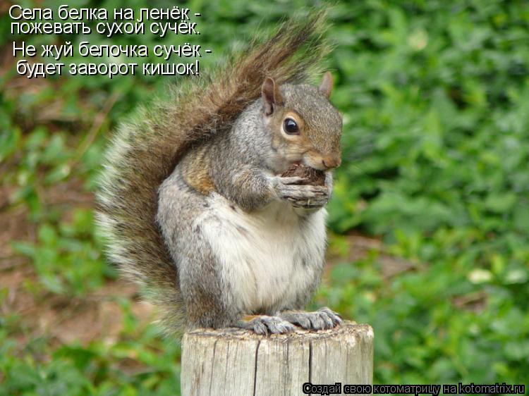 Котоматрица: Села белка на пенёк -  пожевать сухой сучёк. Не жуй белочка сучёк -  будет заворот кишок!