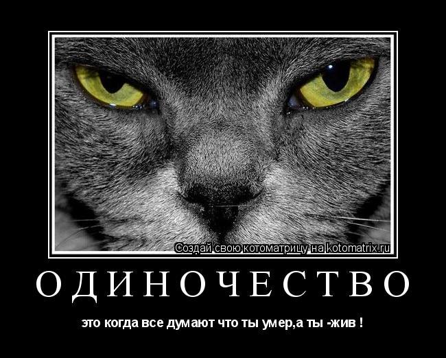 Котоматрица: одиночество это когда все думают что ты умер,а ты -жив !