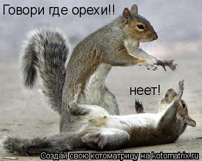 Котоматрица: Говори где орехи!! неет!