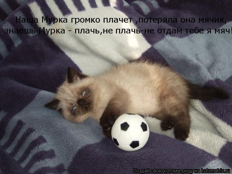 Котоматрица: Наша Мурка громко плачет ,потеряла она мячик,  знаешь Мурка - плачь ,не плачь-не отдам тебе я мяч!  знаешь Мурка - плачь,не плачь-не отдам тебе я