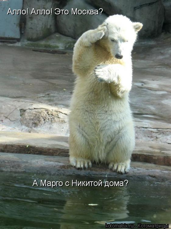 Котоматрица: Алло! Алло! Это Москва? А Марго дома? Алло! Алло! Это Москва?  А Марго с Никитой дома?