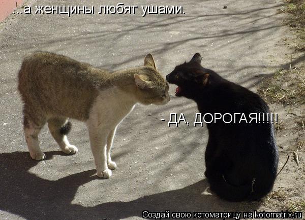 Котоматрица: ...а женщины любят ушами. - ДА, ДОРОГАЯ!!!!!