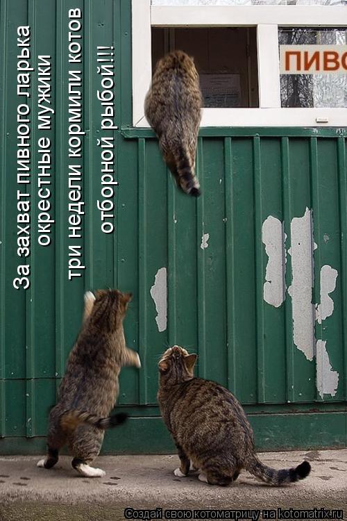 Котоматрица: За захват пивного ларька окрестные мужики три недели кормили котов отборной рыбой!!!