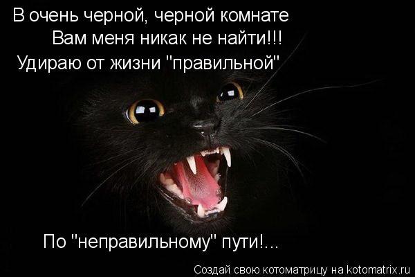 """Котоматрица: В очень черной, черной комнате Вам меня никак не найти!!! Удираю от жизни """"правильной"""" По """"неправильному"""" пути!..."""