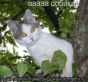 Котоматрица: ааааа собака!