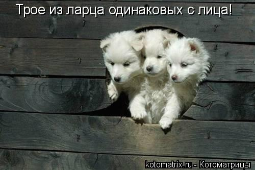 Котоматрица: Трое из ларца одинаковых с лица!