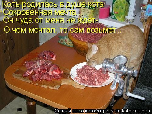 Котоматрица: Коль родилась в душе кота Сокровенная мечта... Он чуда от меня не ждет- О чем мечтал, то сам возьмет...