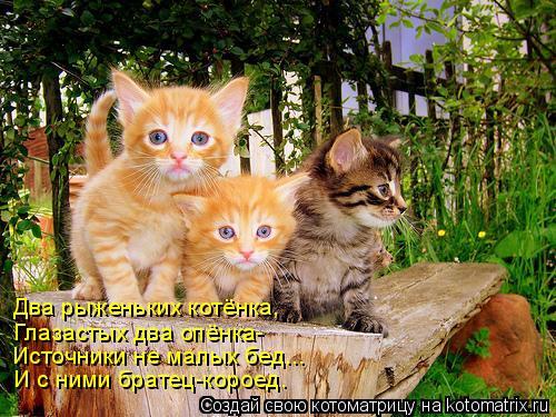 Котоматрица: Два рыженьких котёнка, Глазастых два опёнка- Источники не малых бед... И с ними братец-короед.