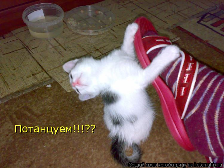 Котоматрица: Потанцуем!!!??