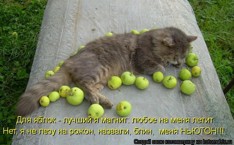 Котоматрица: Для яблок - лучший я магнит: любое на меня летит Нет, я не лезу на рожон, назвали, блин,  меня НЬЮТОН!!!