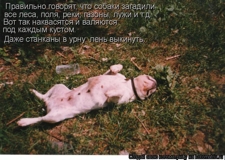 Котоматрица: Правильно говорят, что собаки загадили  все леса, поля, реки, газоны, лужи и т.д. Вот так наквасятся и валяются под каждым кустом. Даже станкан