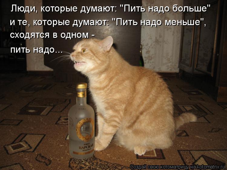 """Котоматрица: Люди, которые думают: """"Пить надо больше""""  сходятся в одном -  и те, которые думают: """"Пить надо меньше"""", пить надо..."""