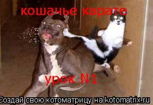 Котоматрица: кошачье карате кошачье карате урок N1