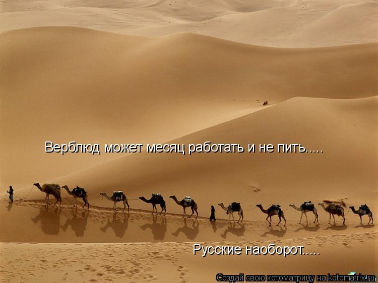 Котоматрица: Верблюд может месяц работать и не пить..... Русские наоборот.....
