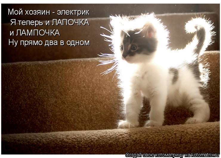 Котоматрица: Мой хозяин - электрик Я теперь и ЛАПОЧКА и ЛАМПОЧКА Ну прямо два в одном