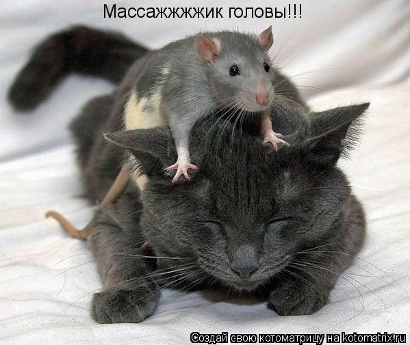 Котоматрица: Массажжжжик головы!!!