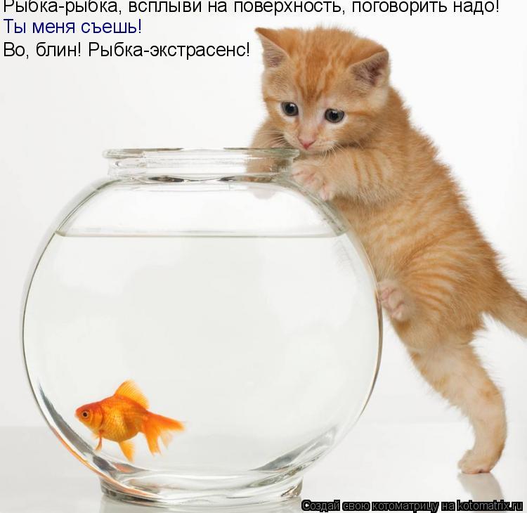 Котоматрица: Рыбка-рыбка, всплыви на поверхность, поговорить надо! Ты меня съешь! Во, блин! Рыбка-экстрасенс!
