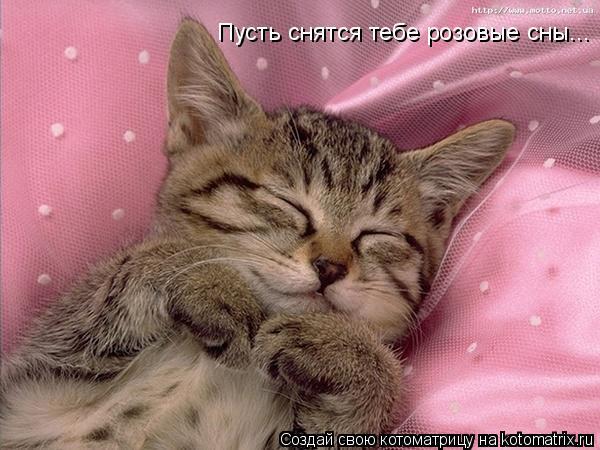 Котоматрица: Пусть снятся тебе розовые сны...