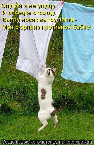 Котоматрица: Случай я не упущу И соседке отомщу. Вытру носик,вытру лапки- Мой сюрприз противной бабке!