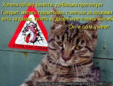 Котоматрица: Хотели собаку завести, да Васька протестует есть за двоих, гулять во дворе и не ловить мышей Говорит: метить территорию, гоняться за кошками