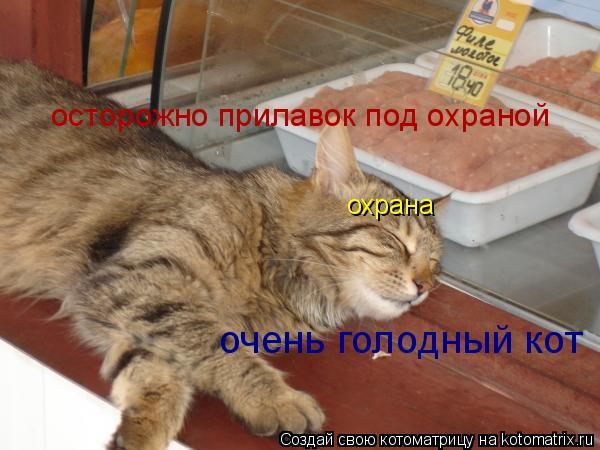 Котоматрица: осторожно прилавок под охраной охрана очень голодный кот