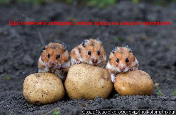 Котоматрица: Щас печёночки забацаем, завтра хрюшу на шашлык пригласим!