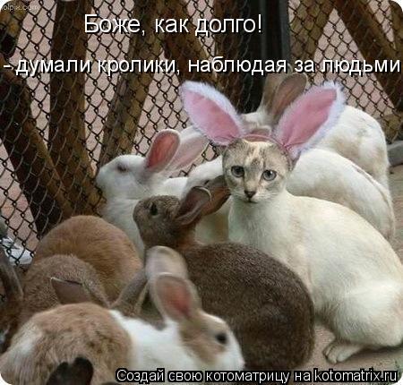 Котоматрица: «Боже, как долго!»  - думали кролики, наблюдая за людьми .