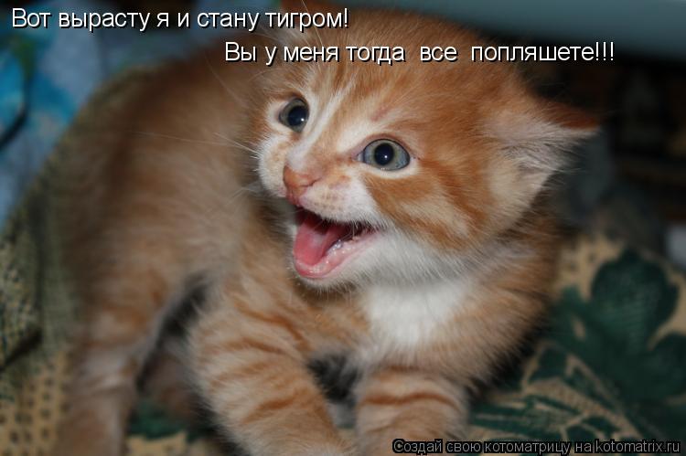 Котоматрица: Вот вырасту я и стану тигром!  Вы у меня тогда  все  попляшете!!!