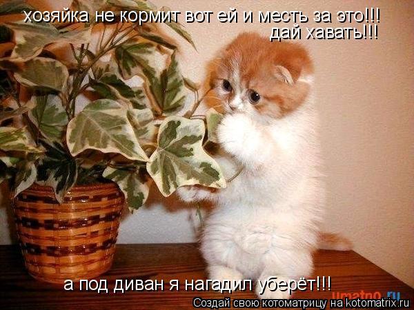 Котоматрица: хозяйка не кормит вот ей и месть за это!!! а под диван я нагадил уберёт!!! дай хавать!!!