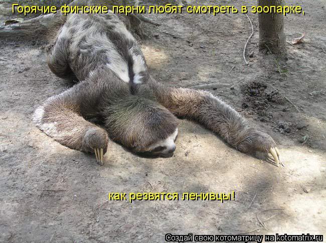 Котоматрица: Горячие финские парни любят смотреть в зоопарке,  как резвятся ленивцы!