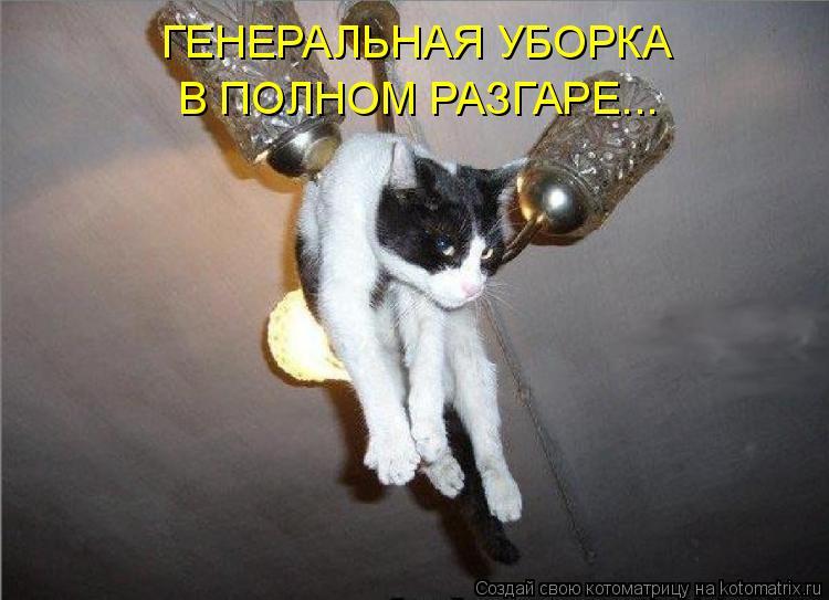 Котоматрица: ГЕНЕРАЛЬНАЯ УБОРКА В ПОЛНОМ РАЗГАРЕ...